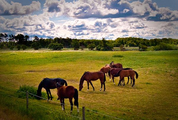 Hästhagar Skepparkroken Hästar