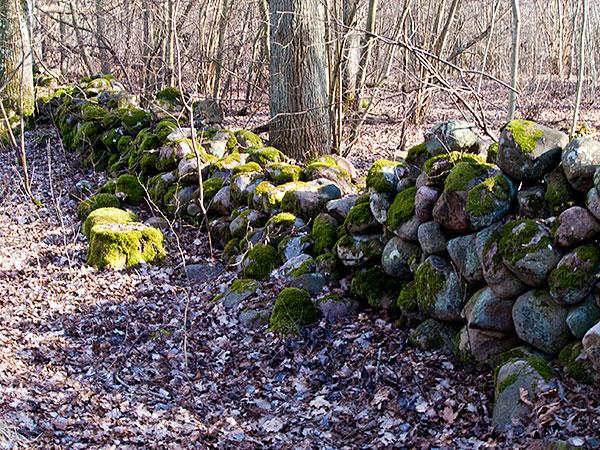 Stengärdsgård vid Magnarps skog Björkhagen Kronoskog Kronoplantering
