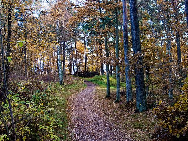 Magnarps skog sent i oktober Björkhagen Kronoplantering Magnarp