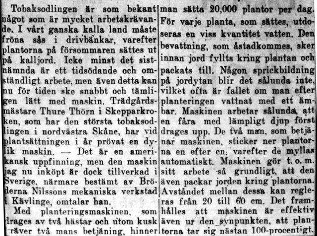 Tidningstext om Thörns tobaksodling i Skepparkroken c:a 1947