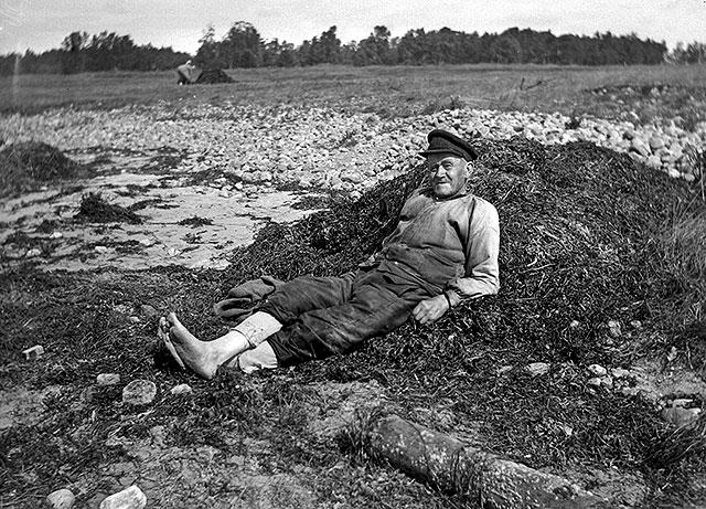 Skepparen Johannes Nilsson samlar tång i Björkhagen på 1920-talet (foto Robert Romberg)