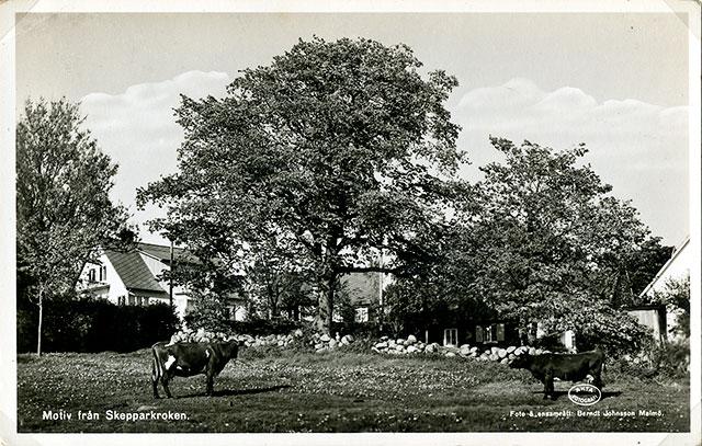 Thörns kor i Skepparkroken (1950-tal)