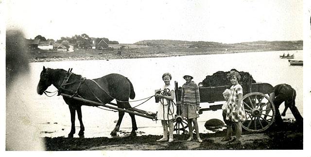 Sture Hellberg hämtar tång i Skepparkroken på 1920-talet (bilden tillhör Erik Hellberg)