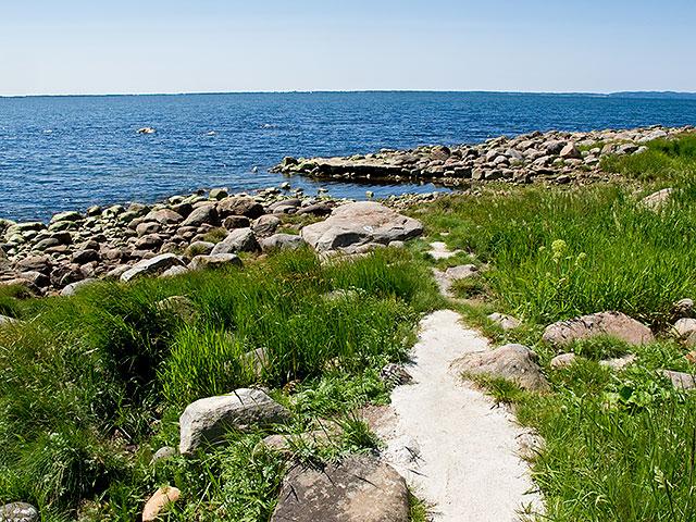 Nyanlagd kås nedanför Strandridarevägen i Björkhagen (juni 2011)