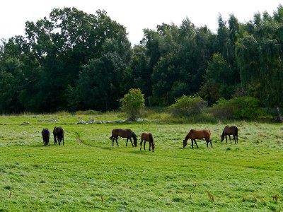 Hästhagarna ovanför Skepparkroken 2011-08-10