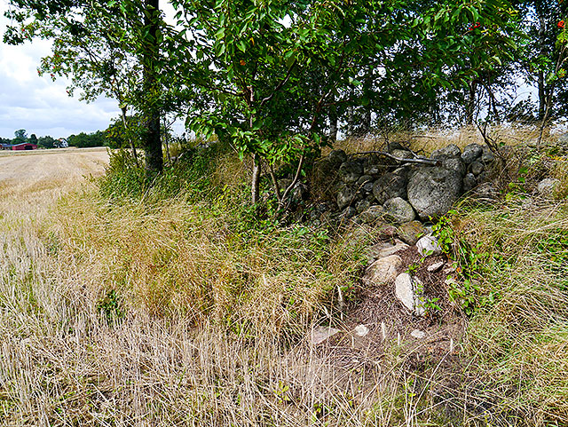 Bronsåldershög vid björkplanteringen ovanför Skepparkroken