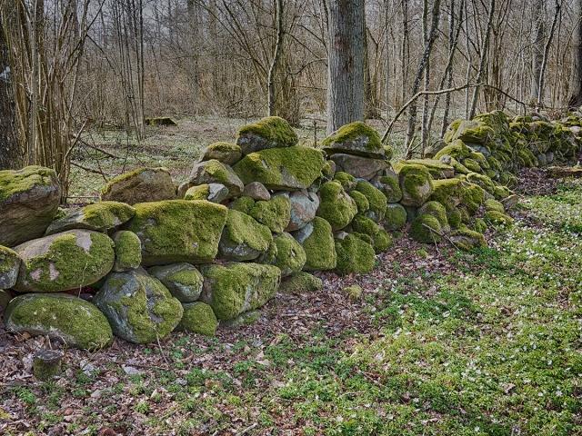 Stenmur i Magnarpsskogen